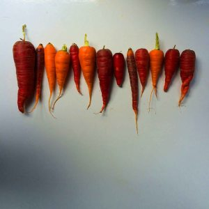 red and orange carrots